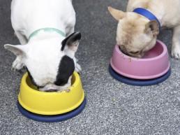 Fransk bulldog spiser VOM