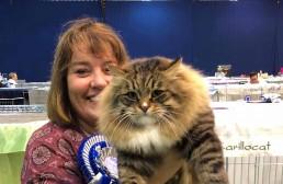 VOM-katter: Bilde av Kedr og eier på katteutstilling.